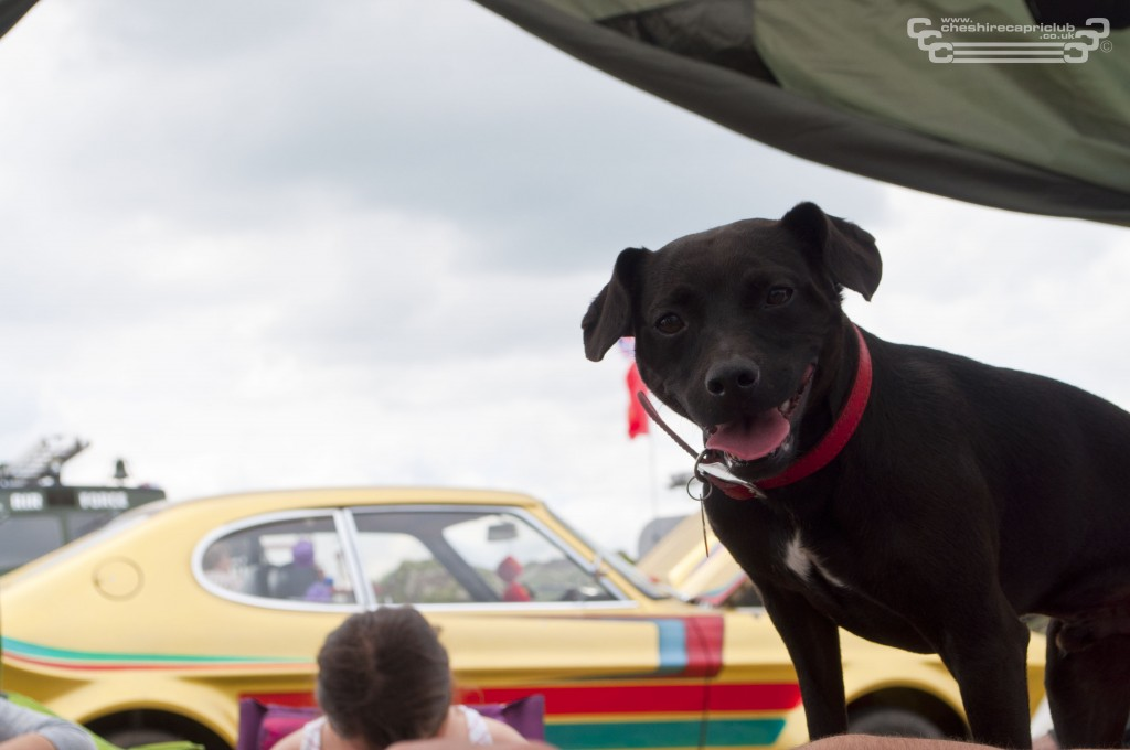 Patch the dog posing infront of Mk1 Gaz's Capri